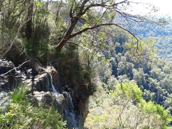 Springbrook, Australia: Goomoolahra Falls - nice cascade
