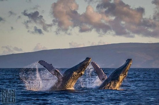 Gordon's Bay, Sudáfrica: See the whales from September to November from Perseverantia