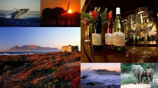 Gordon's Bay, Sudáfrica: Perseverantia Tours
