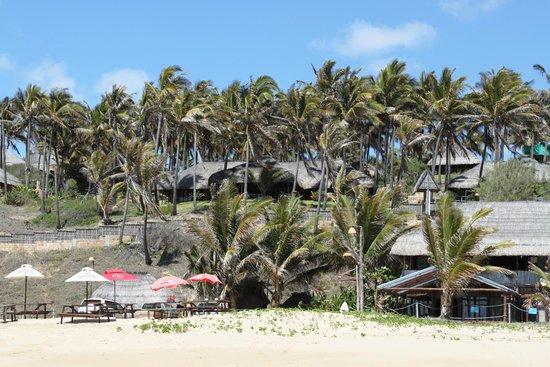 Jeff's Palm Resort: Set amongst the Palms