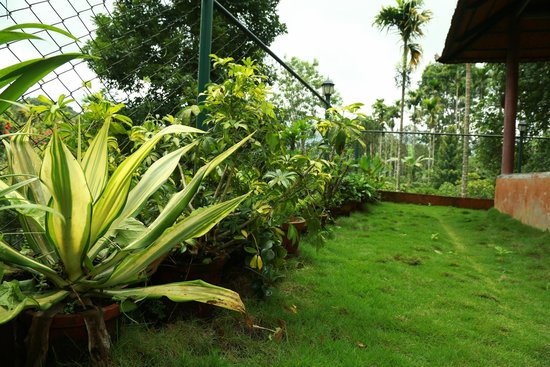 garden - Picture of Wayanad Coffee County, Wayanad District ...