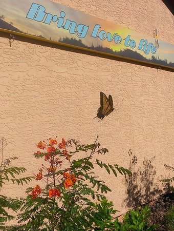 My Place Suites: Bring Love to Life Butterfly