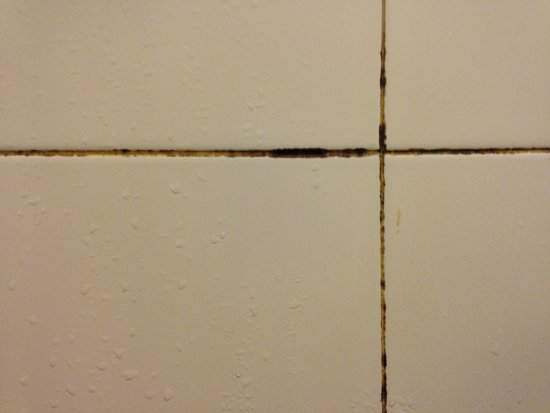 Loong Palace Hotel & Resort: Shower grout