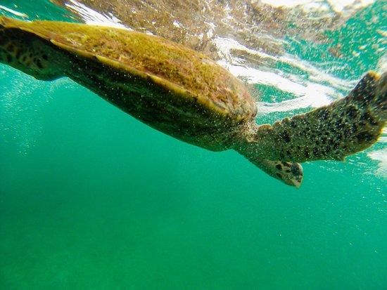Ocean Jewels Resort : Tauchgang