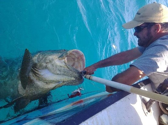 Paradise Fishing Charters : Grouper