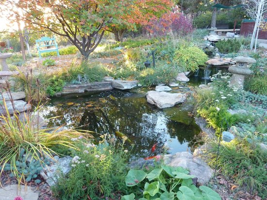 Ravens Ridge: Koi Pond