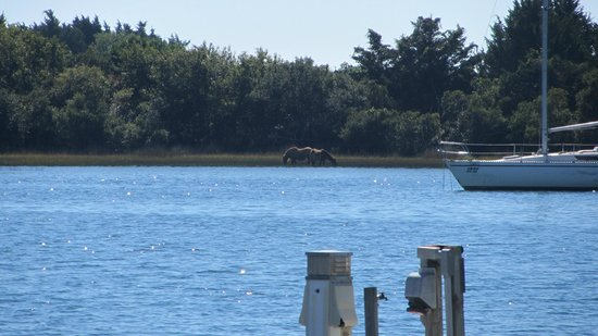 Beaufort Inn: wild horses you can see from downtown