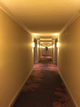 Hilton Atlanta Airport: 16th Floor Hallway