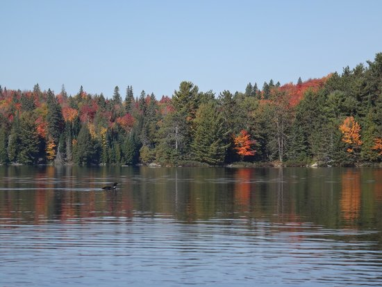 Barrie, Canada: Colours in Algonquin