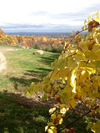 Glorie Farm Winery: Autumn at Glorie Winery
