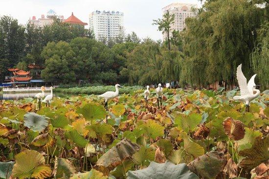 Green Lake (Cui Hu): Nice Green Lake