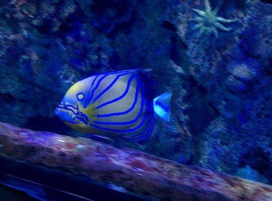 Lionfish picture of mandalay bay aquarium las vegas for Tropical fish las vegas