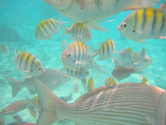 Barrie, Kanada: Fish &  more fish