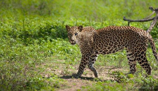 Yala Safaris - Private Tours