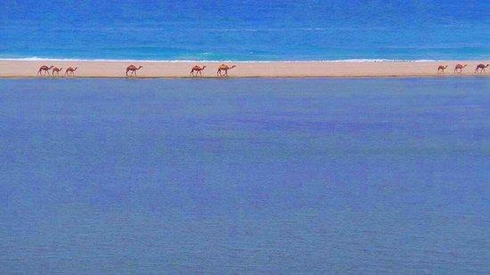 Silk Road Tours Oman