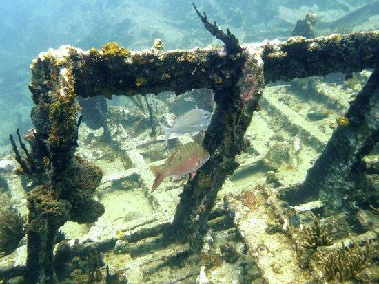 Rhone National Marine Park: RMS Rhone