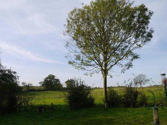 Oak Tree Farm Bed & Breakfast: The view