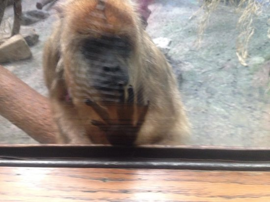 Beardsley Zoo : This guy was friendly!!