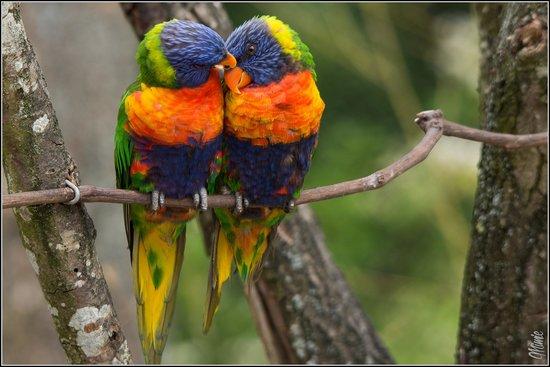 Rio picture of le parc des oiseaux villars les dombes for Oiseaux de france