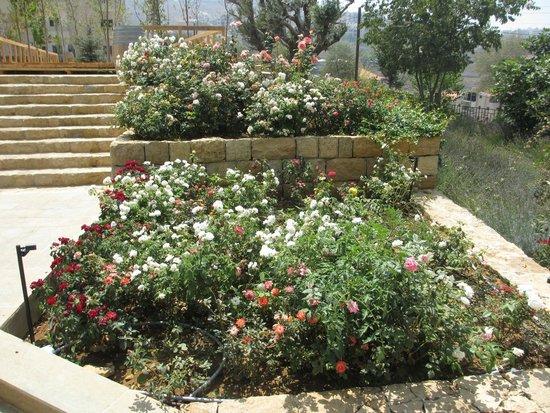 Le Telegraphe de Belle-Vue: Gardens