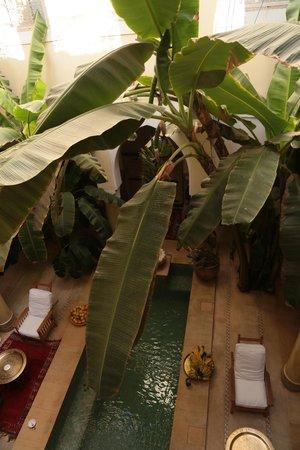 Riad Azoulay: I banani