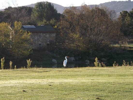Napa Valley, Καλιφόρνια: Just one of the many birds we saw on the course