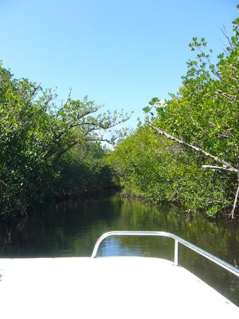 Gulf Coast Visitor Center: Mangrove Boat Tour - November 2014