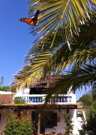 Quinta das Achadas: Local wildlife