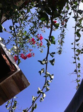 Quinta das Achadas: Above Bouganvillea apartment