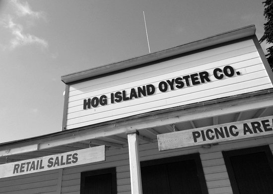 Hog Island Oyster Company: Their sign as you can see it, driving along the road