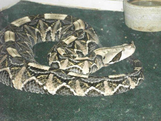 Luray Zoo - A Rescue Zoo: reptile house