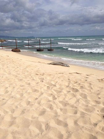 Ewa Beach, HI: We saw a Monk Seal while visiting this beach.  A rare site!