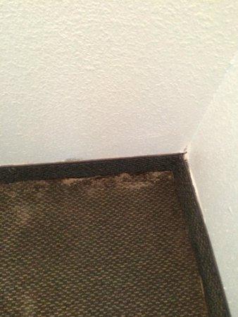 Hiawatha, แคนซัส: Mold on Carpet near exterior wall