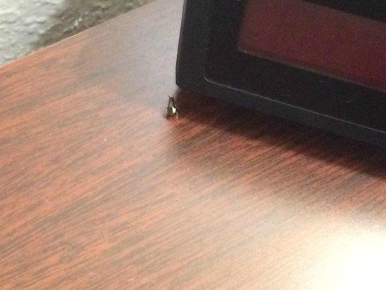 Days Inn Mauldin/Greenville: A bug...