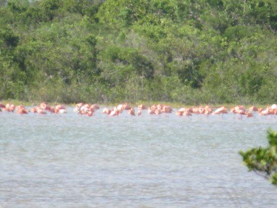 Flamingo Pond