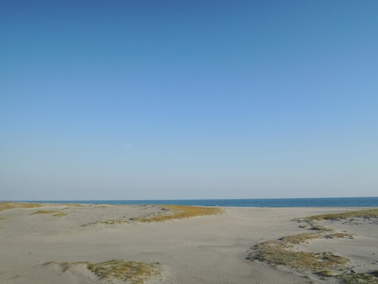 Arai Beach: 広大な砂浜と遠州灘