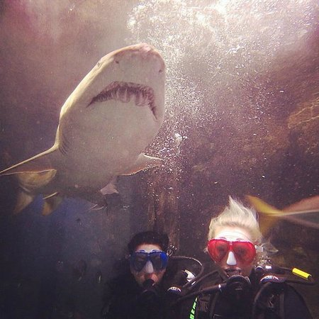 Manly Sea Life Sanctuary - Shark Dive Xtreme : The 3 best friennddsss that anyone could have!