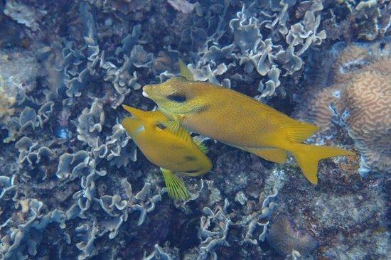 มนต์ทะเล บีช รีสอร์ท: Swiat podwodny