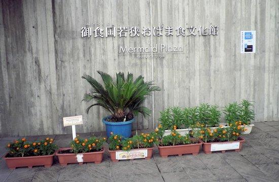 Shikisainoyado Hanatsubaki: 楽しい施設