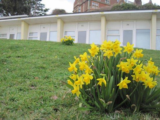 Chalet Bank in Garden 7 - Picture of Felixstowe Seafront Gardens ...