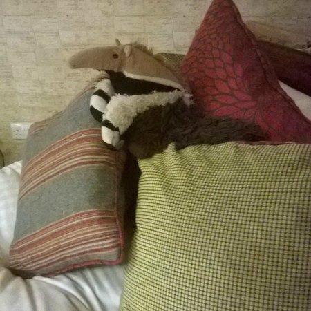 d'Parys Hotel: The anteater!!