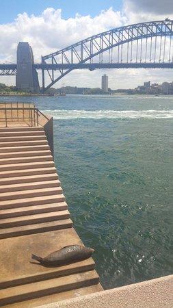 Sydney Architecture Walks : SEALION SPOTTED!