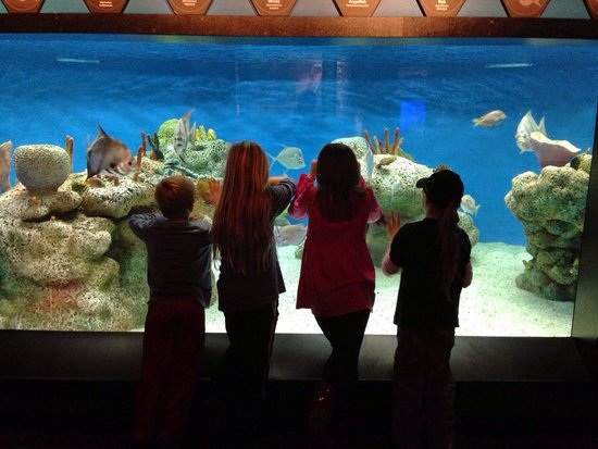 McWane Science Center: The cousins on the bottom floor of the science center