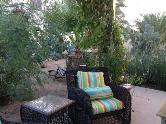 Catalina Park Inn Bed and Breakfast: Cactus garden