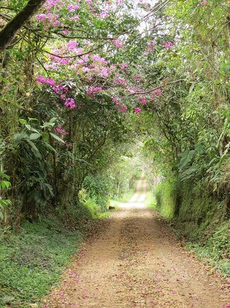 Hacienda San Vicente : Road to Birding  trails