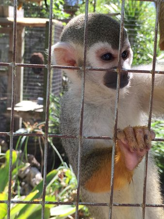 Periwinkle Park & Campground: They have a little zoo on premises that includes monkeys