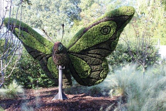 Atlanta Botanical Garden: Giant Butterfly