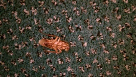 La Quinta Inn Las Cruces Mesilla Valley: Cockroach-note green carpet from La Quinta