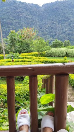 Silverback Lodge : My favorite spot - sitting on the porch gazing at the forest