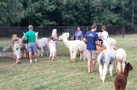 ‪Southern Estates Alpacas‬